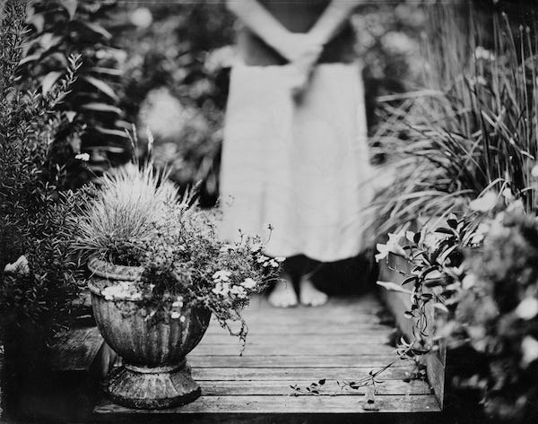 """A photo from """"The Garden"""" collection by Susan Bryant."""