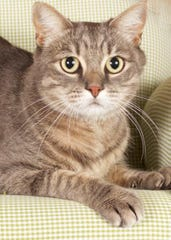 Tabitha is available for adoption with Friends for Life. For more information, call 480-497-8296, email FFLcats@azfriends.org or visit azfriends.org.
