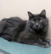 Scruffy is available for adoption at 10807 N. 96th Ave. in Peoria. For more information, call 623-773-2246 after 10 a.m.