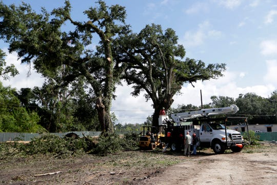 A work crew begins the relatively short process of removing the large oak trees at the intersection of Miles Street and Still Court Tuesday, Aug. 27, 2019.