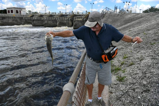"Ken Turner of Stuart releases a jack crevalle he caught on his first cast while fishing Tuesday, Aug. 27, 2019, downstream of the St. Lucie Lock & Dam in Martin County, as water flows out from two of the dam's seven gates. ""I enjoy fishing here, the only time you catch fish is when the gates are open,"" Turner said. ""Usually maybe 10, 20 guys come down here. I'm surprised there is nobody here now. I enjoy fishing here."""