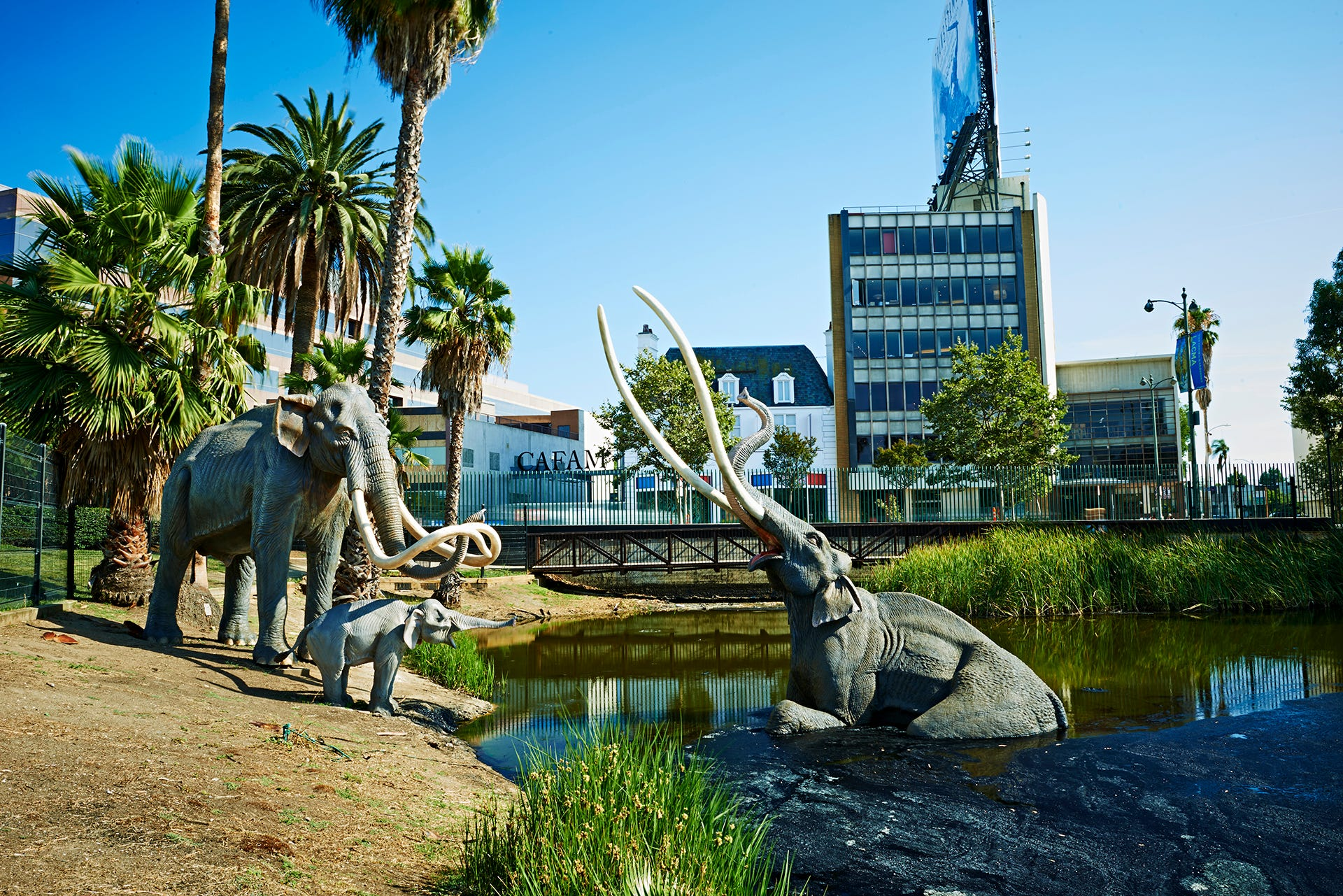 La Brea Tar Pits: Fossils site in Los Angeles to get a makeover