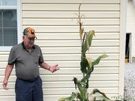Man accidentally grows corn stalk with record-shattering 28 ears