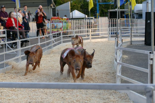 Don't miss the annual pig race at the Michigan State Fair - may the best hog win!