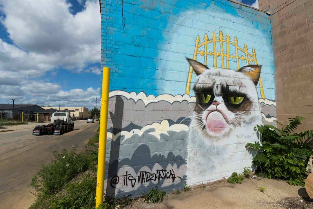 9a52edac-6348-4a55-b91a-4114b60ad06e-MJS_schuster_2_hoffman.jpg_schuster Kocie murale