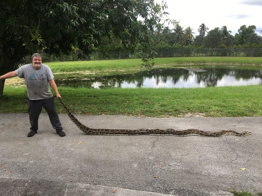 South Florida Water Management District governing board members will hear Thursday a proposal to add $750,000 to the exotic snake hunting program, which has removed more than 2,500 pythons from the wild since its inception in March 2017. FWC Python Action Team member George Perkins caught this 17-foot-9-inch Burmese python at Big Cypress National Preserve on Aug. 26.