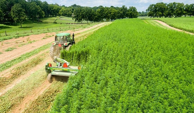 Wisconsin's research pilot program requires that anyone who wants to grow or process hemp obtain a license.