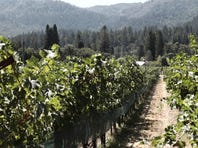 Wineries must adapt if they want to survive thanks to climate change
