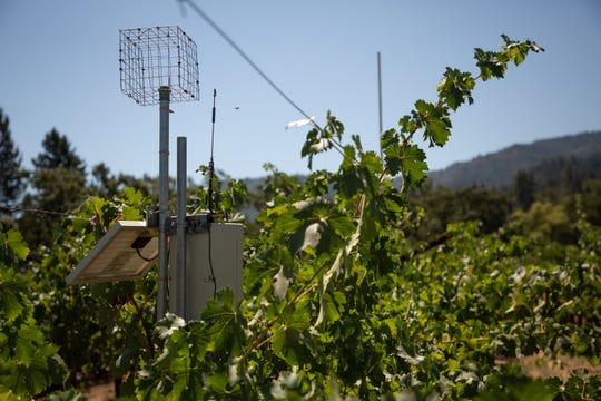 A surface renewal instrument measures humidity in the vineyards at the Spottswoode Winery in St. Helena, Calif.