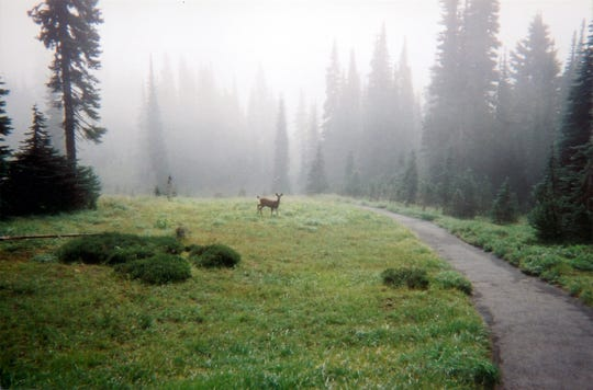 Cougar Rock Campground is conveniently located at an ideal spot in Washington State's Mount Rainier National Park.