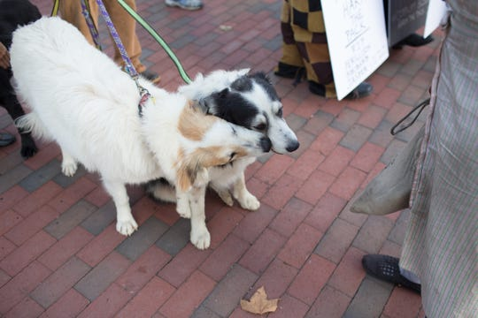 A vigil was held on the evening of Aug. 28, 2019 in remembrance of two dogs, Ferguson and Rhubarb, who were euthanized by Brother Wolf Animal Rescue over the weekend. The vigil, which drew former volunteers and employees of Brother Wolf, as well as members of the community, was held at the Vance Monument.