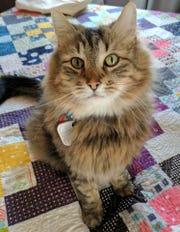 ARL offering $1,000 reward for information on Beaverdale cat