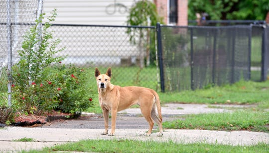 Detroit fields about 485 citizen complaints for animals each week.