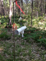 This beetle trap helps researchers at Michigan State University determine when beetles are actively spreading oak wilt and when pruning oaks should be avoided
