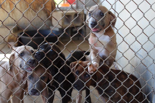 Columbia Animal Control and Rescue has dozens of dogs and cats available for adoptions.