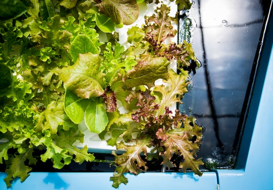 A Daleville-based aquaponic greenhouse grows a variety of vegetables year-round.