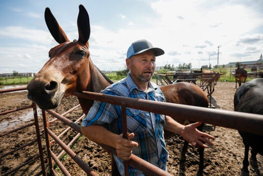Les Clancy talks about training mules at his farm in Ozark, Mo., on Tuesday, Aug. 27, 2019. Clancy is organizing the Ozark Mule Days event on Friday, Aug. 30 - Sunday, Sep. 1, at the Ozark Empire Fairgrounds in Springfield, Mo.