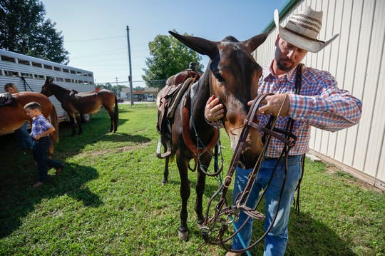 John Logsdon puts the reins onto his mule Okie at the Ozark Empire Fairgrounds on Thursday, Aug. 29, 2019, in Springfield, Mo. Logsdon and Okie will be competing at the Ozark Mule Days event on Friday, Aug. 30 - Sunday, Sep. 1, at the fairgrounds.