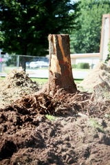 On the west side of Sunshine Elementary, trees are being removed to make way for a new parking area.