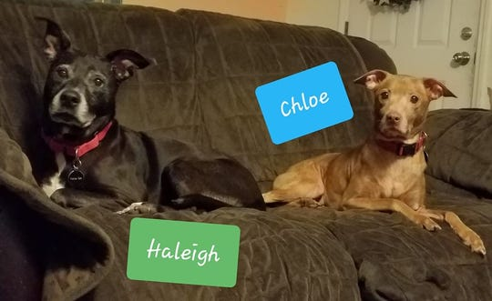 Chloe and Haleigh are looking for new homes.