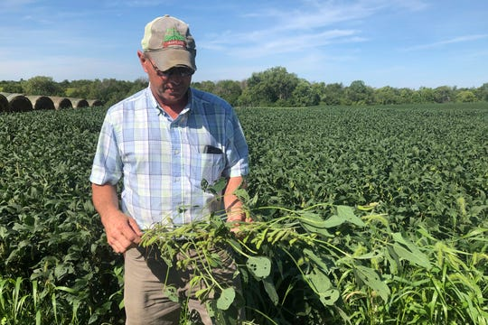 "Farmer Randy Miller is shown with his soybeans, Thursday, Aug. 22, 2019, at his farm in Lacona, Iowa.  Miller, who also farms corn, is among farmers unhappy with President Donald Trump over  waivers granted to oil refineries that have sharply reduced demand for corn-based ethanol. Miller called it ""our own country stabbing us in the back."" (AP Photo/Julie Pace)"