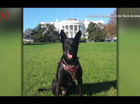 Secret service dog to get medal for protecting President Obama from White House intruder