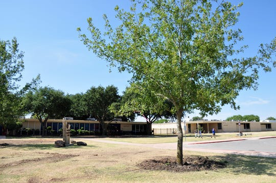 Red oak trees replaced aging, rotting ash trees at Cooper High School this past week. Ortiz Elementary and Long Early Learning Center received new trees as well.