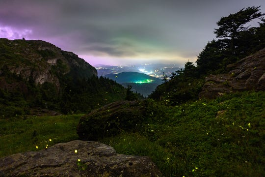 Synchronous fireflies light up an overlook just below Grandfather Mountain's Mile High Swinging Bridge in Linville, North Carolina. Found this summer on Grandfather Mountain, Photinus carolinus is the only species of firefly in North America that synchronize their lighting display.