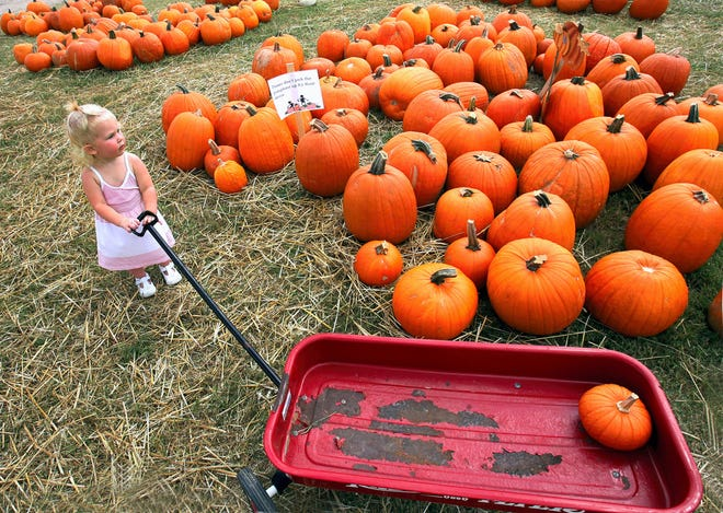 Load up on pumpkins for fall in Corpus Christi.