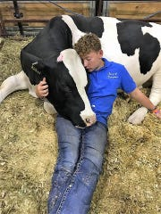 Bradin Bjelland of Gillett spends some quiet time with his dairy steer Sherlock in the Camp of Champions at the Wisconsin State Fair this month. Sherlock was judged Champion Registered Dairy Steer and sold at the the Governor's Blue Ribbon Livestock Auction.