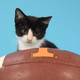 We asked this very tiny kitten to pick the winners for all of Tennessee's games