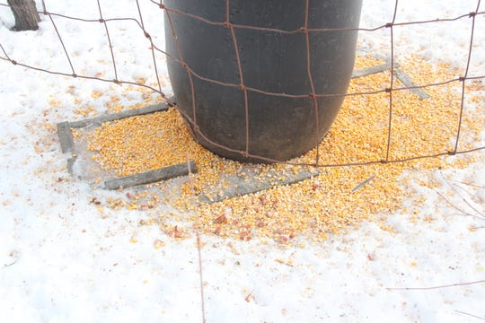 Baiting and feeding wildlife, such as at this corn feeder site, is prohibited starting Sept. 1 in Barron, Burnett, Polk and Washburn counties. The ban is due to a CWD-positive elk found on a farm near Shell Lake, Wis.
