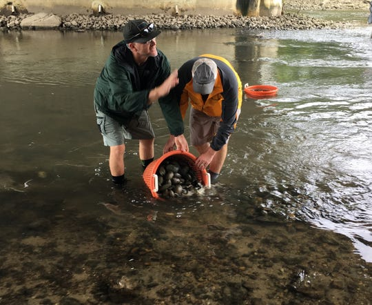 DNR biologist Brant Fisher is assisted by a Muncie Sanitary District employee in unloading a bucket of rescued mussels into a shallow area for relocation later in the day.