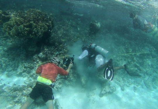 Especialistas participan este viernes en la plantación de 20.000 pies de coral frente a las costas de Cancún y la Riviera Maya, en el caribe mexicano.
