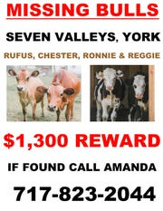 A reward is being offered for the safe return of the cows. Since this poster was published, the reward has increased to $1,700.