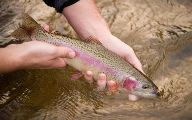 The cost to catch a trout in Missouri will go up on Feb. 29, according to MDC.