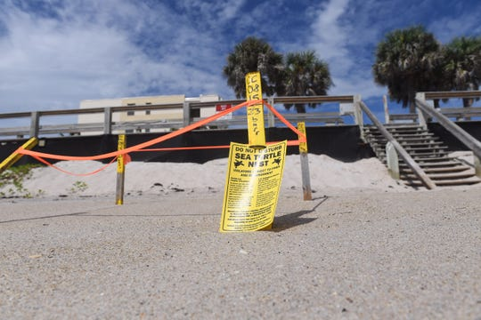 With the arrival of Hurricane Dorian on the Florida Coast this weekend, concern is growing for the survival of sea turtle nests on the Treasure Coast. Several beaches suffer erosion due to the high tide and surf.