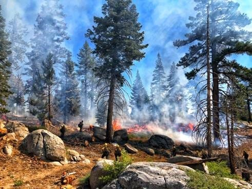 The Broder Fire is burning at a high elevation in Sequoia National Forest.