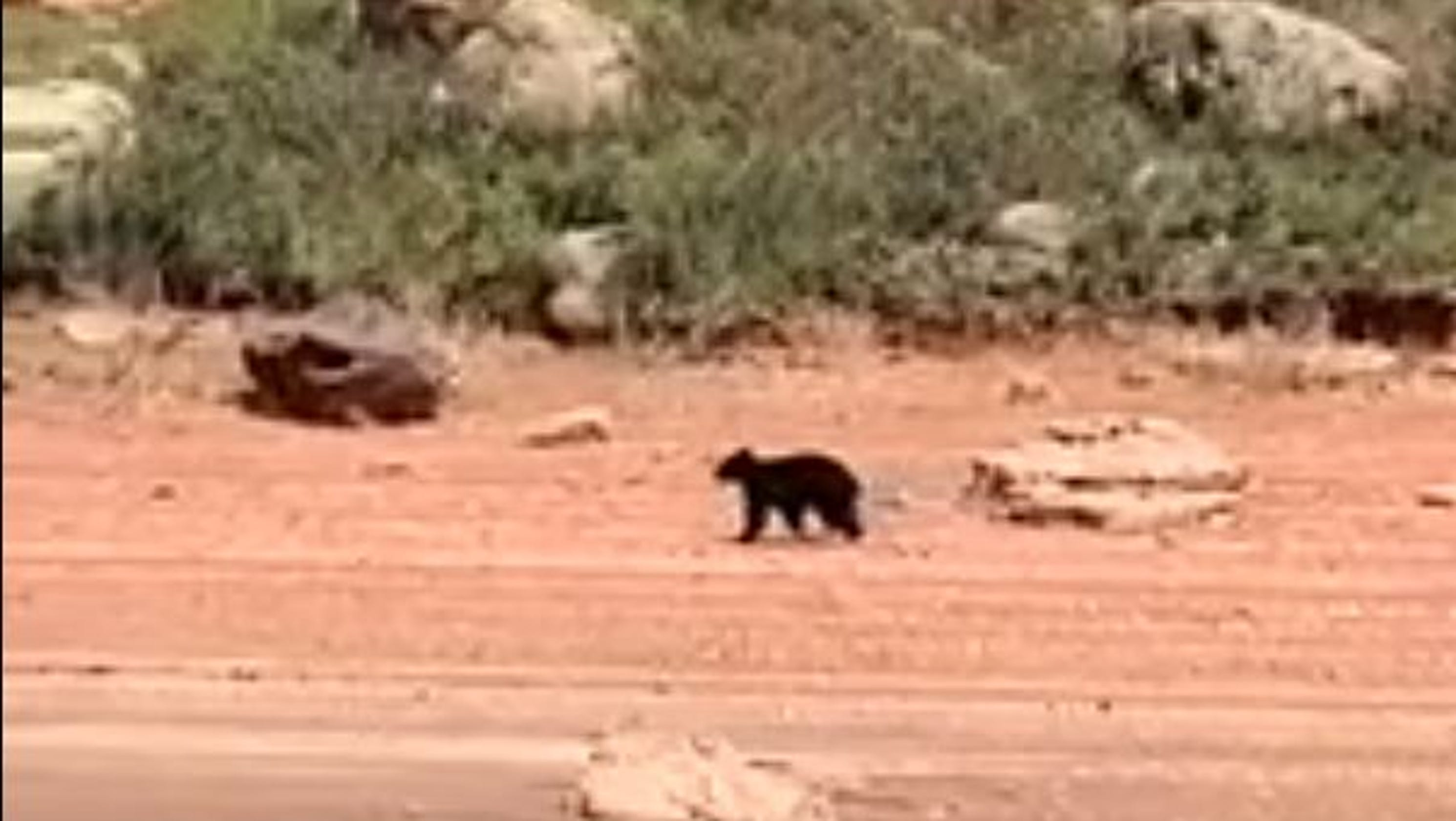 Bear surprises Labor Day weekend boaters at Horsetooth Reservoir