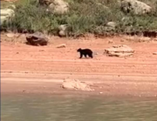 Bear spotted at Horsetooth Reservoir