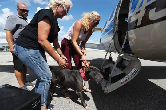 Melissa Blount, an officer for Clewiston Amimal Control and volunteer Laura Smith load a shelter dog into a Pilots N Paws airplane at the Immokalee Airport for transfer to Big Fluffy Rescue in Nashville. The dogs was one of several in danger of being euthanized unless transferred away from Hurricane Dorian's path.