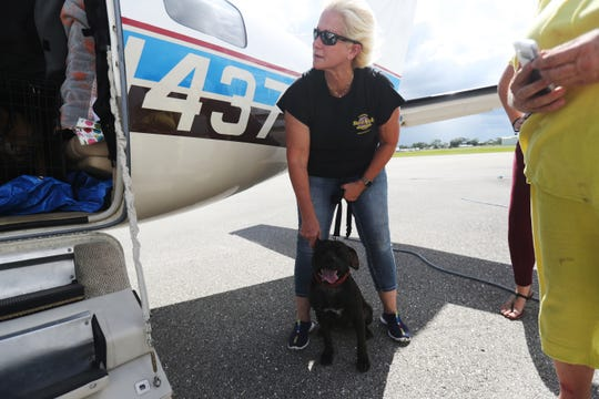 Laura Smith, a volunteer for Clewiston Animal Control loads a shelter dog into a Pilots N Paws airplane at the Immokalee Airport for transfer to Big Fluffy Rescue in Nashville. The dog was one of several in danger of being euthanized unless transferred away from Hurricane Dorian's path.