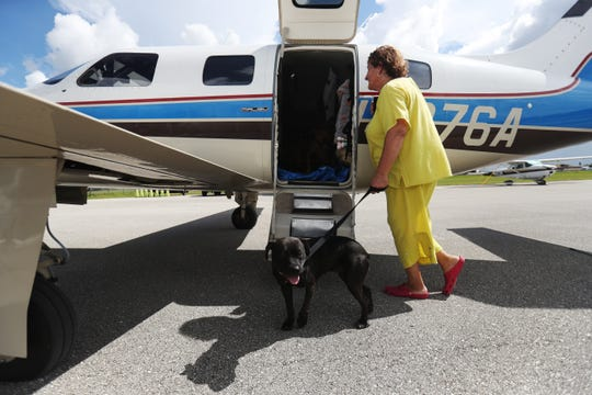 Kathy Irey, a volunteer for Clewiston Animal Control prepares to load a shelter dog into a Pilots N Paws airplane at the Immokalee Airport for transfer to Big Fluffy Rescue in Nashville. The dog was one of several in danger of being euthanized unless transferred away from Hurricane Dorian's path.