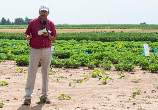 Naveen Puppala, a New Mexico State University college professor who oversees the university's peanut breeding program, speaks to attendees at the 2019 Field Day at the Agricultural Science Center at Clovis in August.