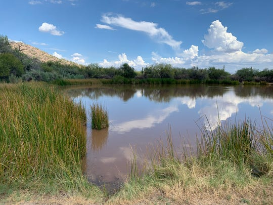 The holding pond at Quitobaquito Springs, a desert oasis 13 miles east of Lukeville, Arizona, is man-made, but the natural spring that feeds it is believed to have sustained life for thousands of years.