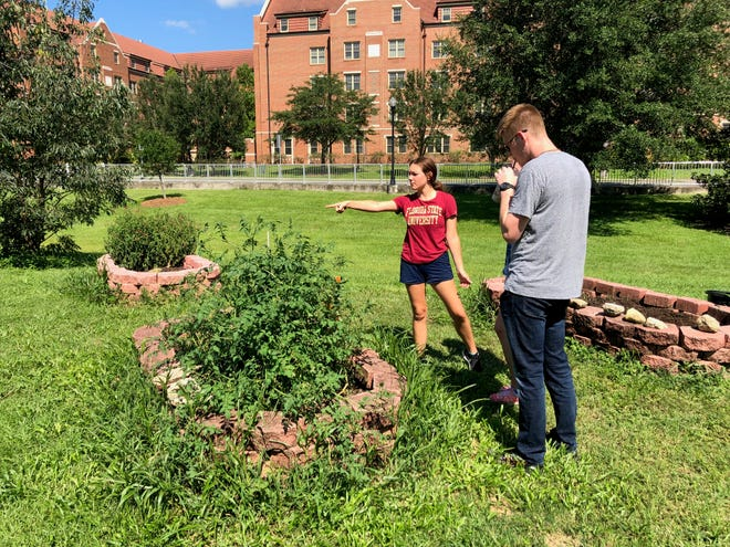 FSU students learn about sustainable farming practices while decompressing after class.