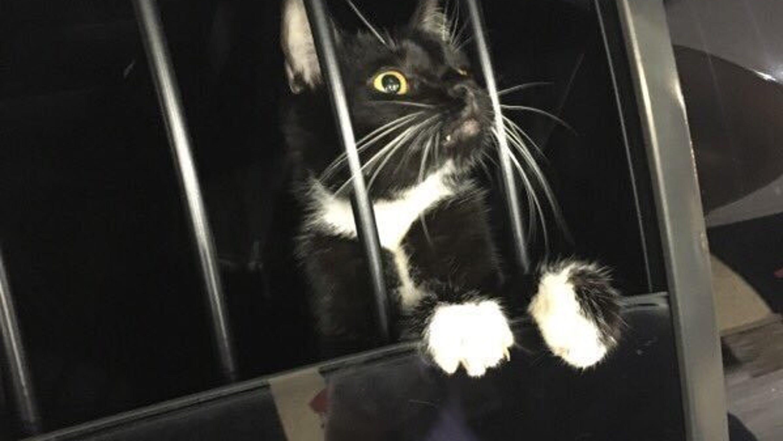 Cat burglar, prison bats, USS Arizona Memorial: News from around our 50 states