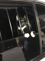 Collier County Sheriff's officers caught the 'cat burglar' inside a residence on 60th Ave. Northeast, Naples.
