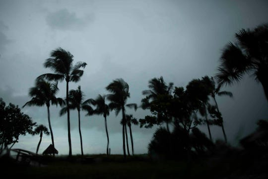 Palm trees wave in the wind during a storm at Lowdermilk Park in Naples on Monday, September 2, 2019.