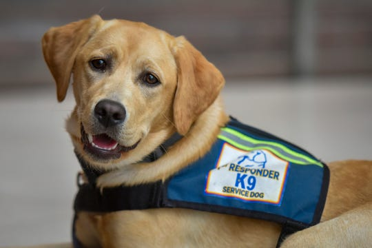 Lennie waits for his next lesson at the Fairfax County, Virginia, government center on Monday, Aug. 26, 2019. The trainers and dogs are being trained by an organization called First Responder Canine, which provides assistant dogs to first responders who have had life changing trauma.